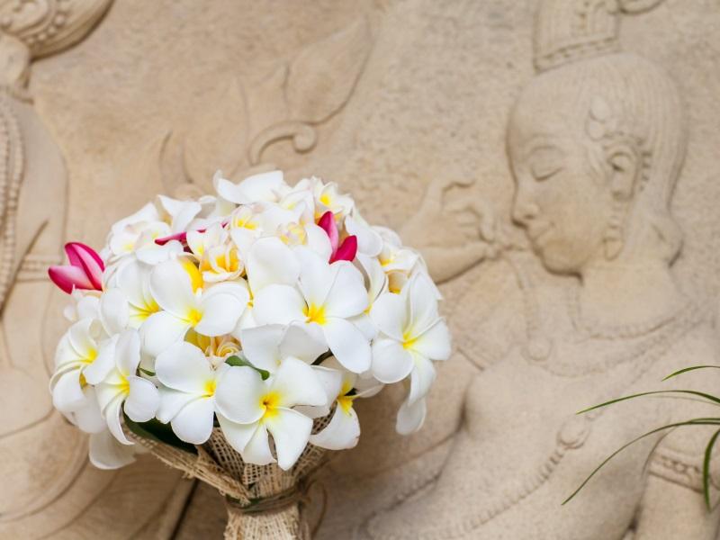 Flori decorative – plumeria